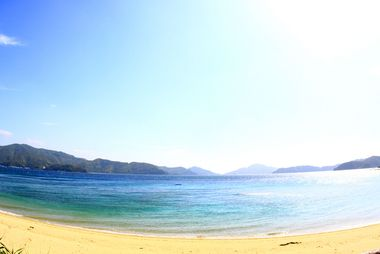 奄美 大島 ダイビング ショップ